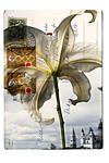 Lily in Venice by Kevin Sprague (Giclée Print)