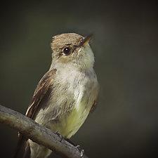 Song of a Western Wood Pewee III by Yuko Ishii (Color Photograph)