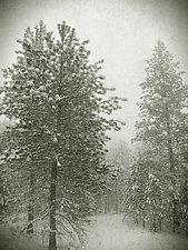 Wonderland by Yuko Ishii (Black & White Photograph)