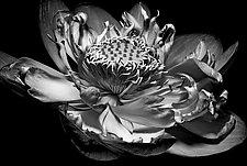 Inner Light by Barry Guthertz (Black & White Photograph)