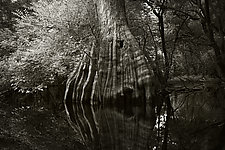Savannah Swamp V by Greg Stroube (Black & White Photograph)