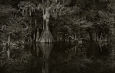 Savannah Swamp IX by Greg Stroube (Black & White Photograph)
