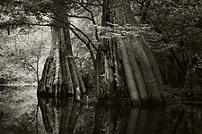 Savannah Swamp IV by Greg Stroube (Black & White Photograph)