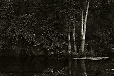Savannah Swamp VIII by Greg Stroube (Black & White Photograph)
