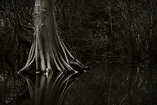 Savannah Swamp II by Greg Stroube (Black & White Photograph)