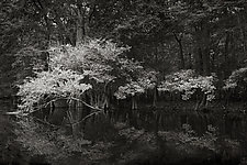 Savannah Swamp VII by Greg Stroube (Black & White Photograph)