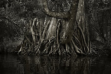 Savannah Swamp I by Greg Stroube (Black & White Photograph)
