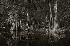 Savannah Swamp X by Greg Stroube (Black & White Photograph)