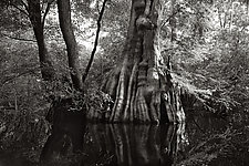Savannah Swamp VI by Greg Stroube (Black & White Photograph)
