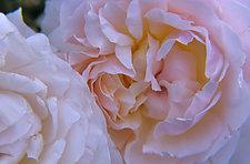 Tender Romance by Patricia Garbarini (Color Photograph)