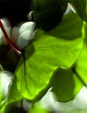 Light I by Katherine Morgan (Color Photograph)