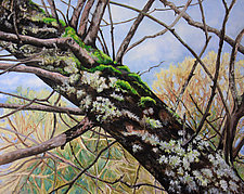 Lichens and Moss by Judy Hawkins (Oil Painting)