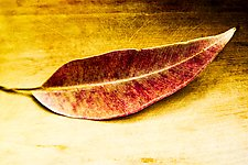 Leaf, Hawaii by Jed Share (Color Photograph)