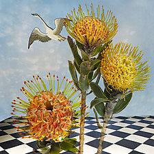 Pincushion Protea by Patricia Barry Levy (Giclee Print)