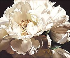 One White Peony by Barbara Buer (Giclee Print)