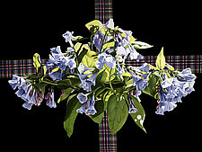 Blue Bells by Barbara Buer (Giclee Print)
