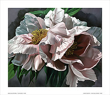 Two Pink Peonies by Barbara Buer (Giclee Print)