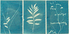 Cyanotype Triptych by Pamela Viola (Monochrome Photograph)