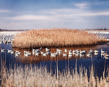Birds of Winter by Pamela Viola (Color Photograph)