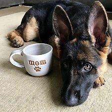 Pet Parent Mugs by Louise Bilodeau (Ceramic Mug)