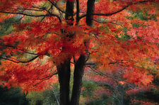 Autumn Montage by Patricia Garbarini (Color Photograph)