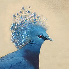 Song of a Blue Crowned Pigeon I by Yuko Ishii (Color Photograph)