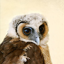 Healing Owl V by Yuko Ishii (Mixed-Media Color Photograph)