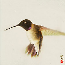 Song of a Black-Chinned Hummingbird by Yuko Ishii (Color Photograph)