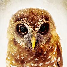 Owl Love I by Yuko Ishii (Color Photograph)