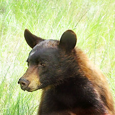 Healing Bear by Yuko Ishii (Color Photograph)
