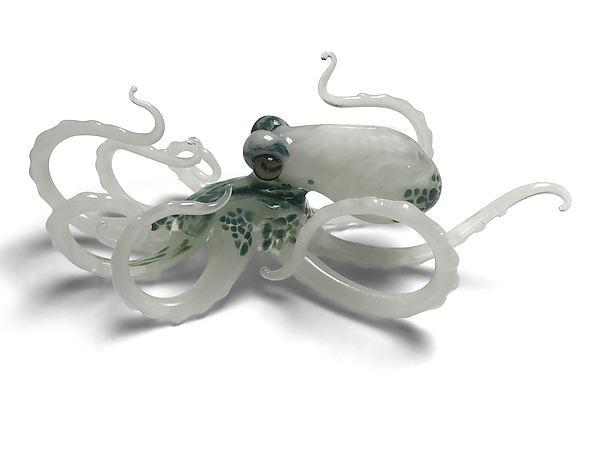 Small White Octopus