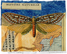 Natural History by Ouida  Touchon (Monotype Print)