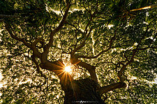 Under the Canopy by Matt Anderson (Color Photograph)