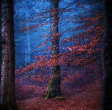 Supernatural by Matt Anderson (Color Photograph)