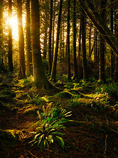 Ireland Forest No.1 by Matt Anderson (Color Photograph)