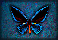 D'Urville's Birdwing by Michael Protiva (Giclee Print)
