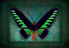 Rajah Brooke's Birdwing by Michael Protiva (Giclee Print)