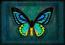 Priam's Birdwing by Michael Protiva (Giclee Print)
