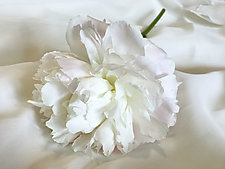 Peony by Julie Betts Testwuide (Color Photograph)