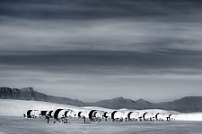 Vacationing on Mars by Richard Speedy (Black & White Photograph)