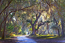 Jekyll Island Sunlight by Richard Speedy (Color Photograph)