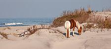 Island Pony by Richard Speedy (Color Photograph)