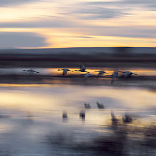Cranes in Flight by Terry Thompson (Color Photograph)