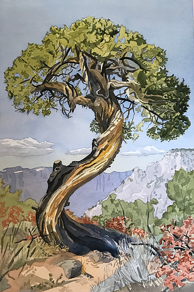 The Old Juniper Tree