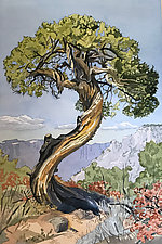 The Old Juniper Tree by Meredith Nemirov (Giclee Print)