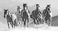 Horses Crest the Hill by Carol Walker (Black & White Photograph)