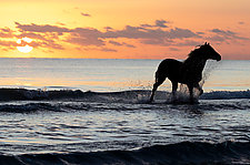 Ocean Horse Runs at Sunrise by Carol Walker (Color Photograph)
