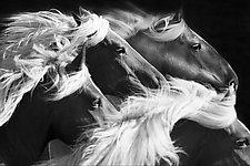 Big Mares Run by Carol Walker (Black & White Photograph)