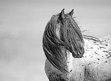 Wild Glory by Carol Walker (Black & White Photograph)