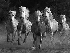 Water Run by Carol Walker (Black & White Photograph)